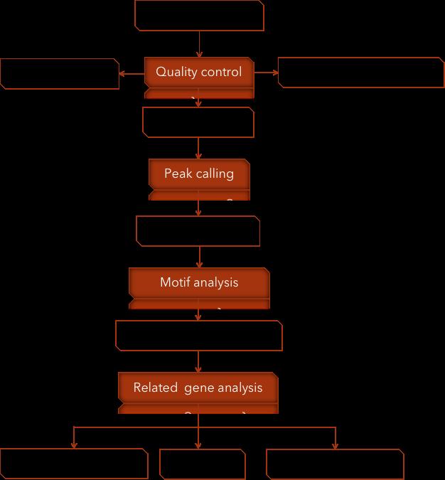 CD Genomics ATAC-seq data analysis pipeline - CD Genomics.