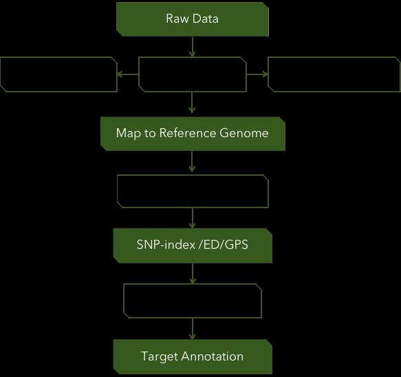 Fig 3. Pipeline of Bulked Segregant Analysis. - CD Genomics