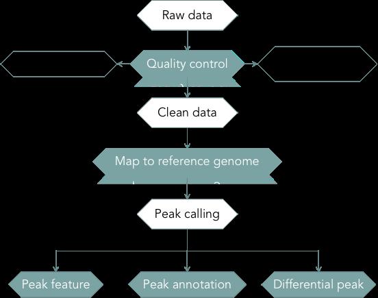 CD Genomics ChIP-Seq data analysis pipeline - CD Genomics.