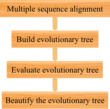 Phylogenetic tree construction pipeline. - CD Genomics.
