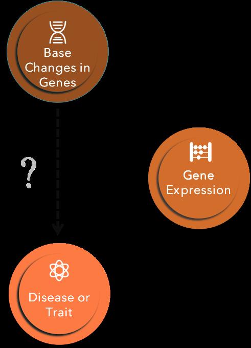 eQTL analysis is a bridge between genetic changes and diseases. - CD Genomics
