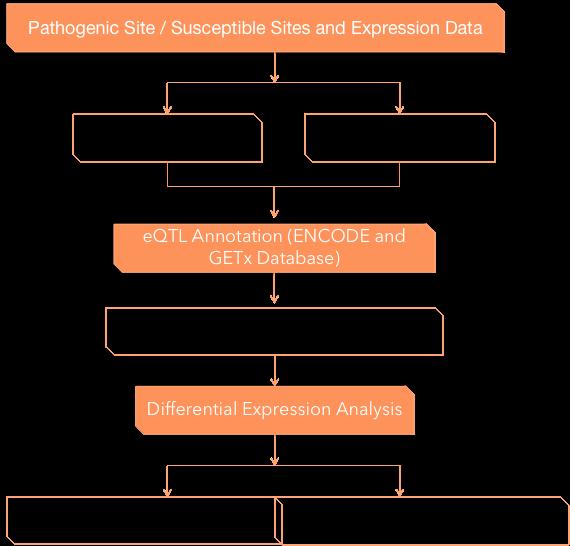 eQTL analysis process. - CD Genomics