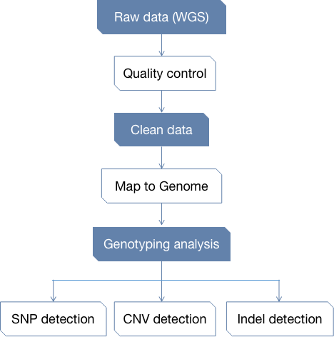 CD Genomics Genotyping Analysis Pipeline - CD Genomics.