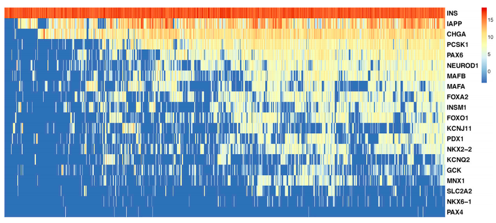 Heatmap of beta cell markers genes in beta cells from Fluidigm 800HT platforms.