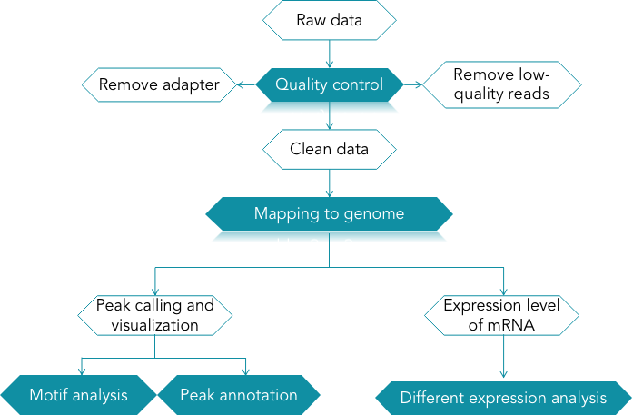 CD Genomics MeRIP-seq data analysis pipeline - CD Genomics.