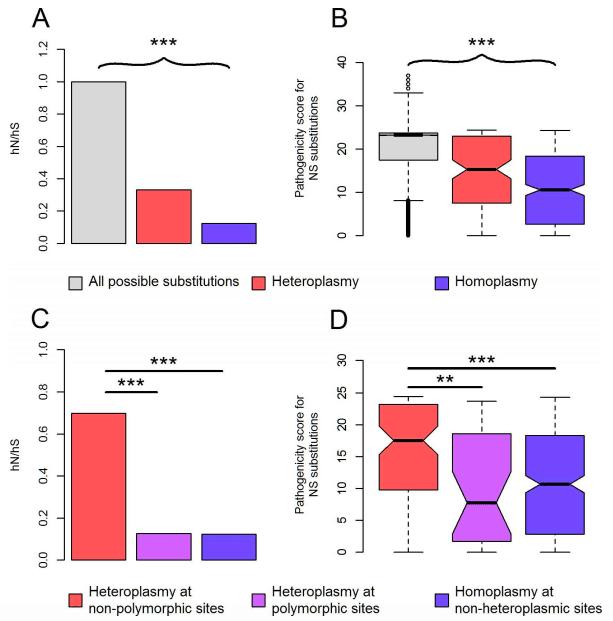 Fig 2. Characteristics of mtDNA variants.