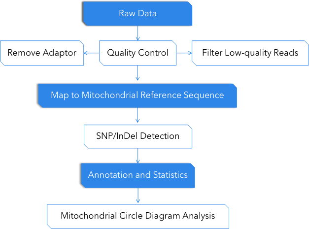 Fig 3. Pipeline of Mitochondrial Genome Analysis. - CD Genomics
