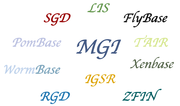 Model Organism Databases - CD Genomics