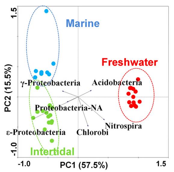 Principal component analysis (PCA) of phylum abundance data using Canoco 4.5.