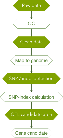 CD Genomics QTL-Seq analysis pipeline - CD Genomics.