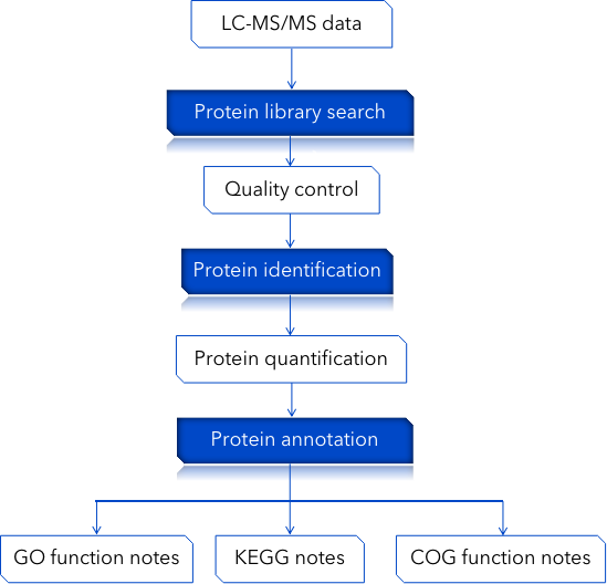 CD Genomics qualitative proteome data analysis pipeline - CD Genomics.