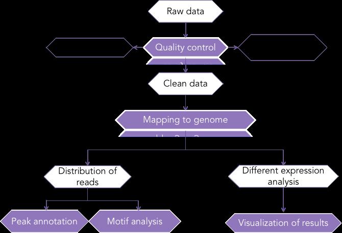 RCD Genomics RIP-seq data analysis pipeline - CD Genomics.