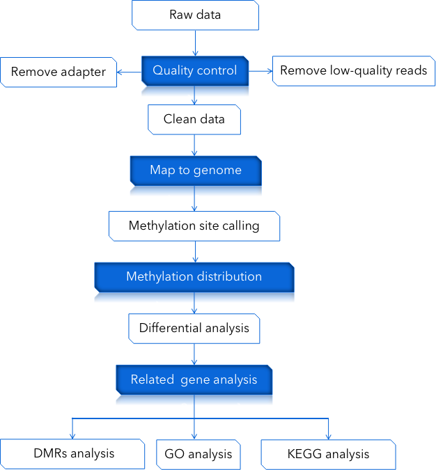 CD Genomics RRBS sequencing data analysis pipeline - CD Genomics.