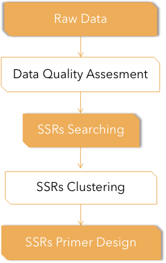 Fig 3. Pipeline of SSR Analysis. - CD Genomics