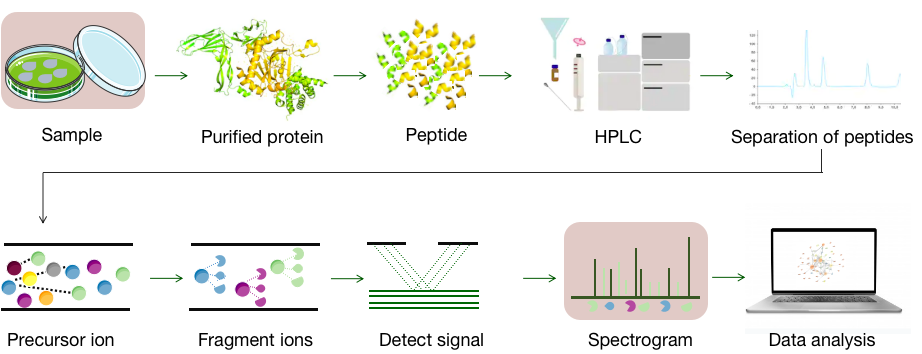Schematic diagram of targeted proteomics technology - CD Genomics.