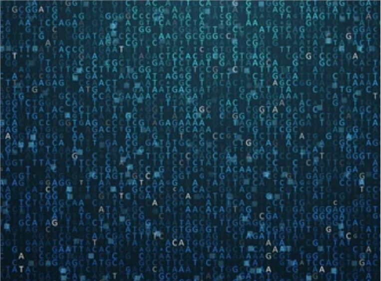 Genome Size Estimation: Origin, Definition, and Methods