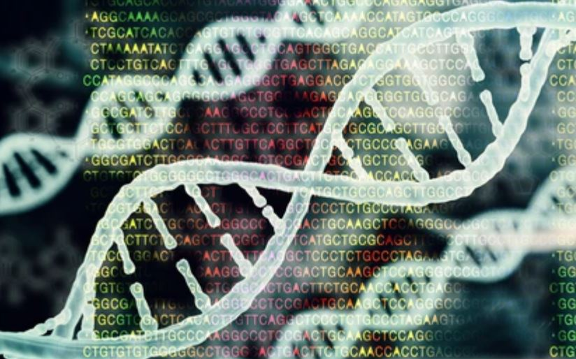 The Process of Variant Analysis in Bioinformatics