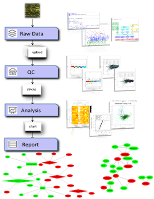 Bioinformatic Analysis Platform
